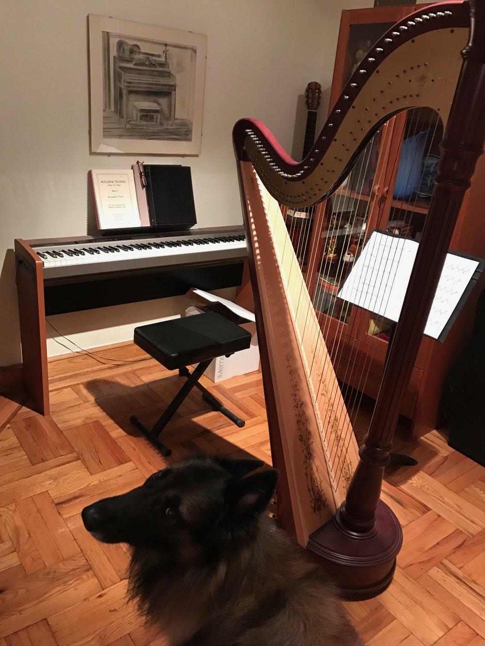 Harp and Moki