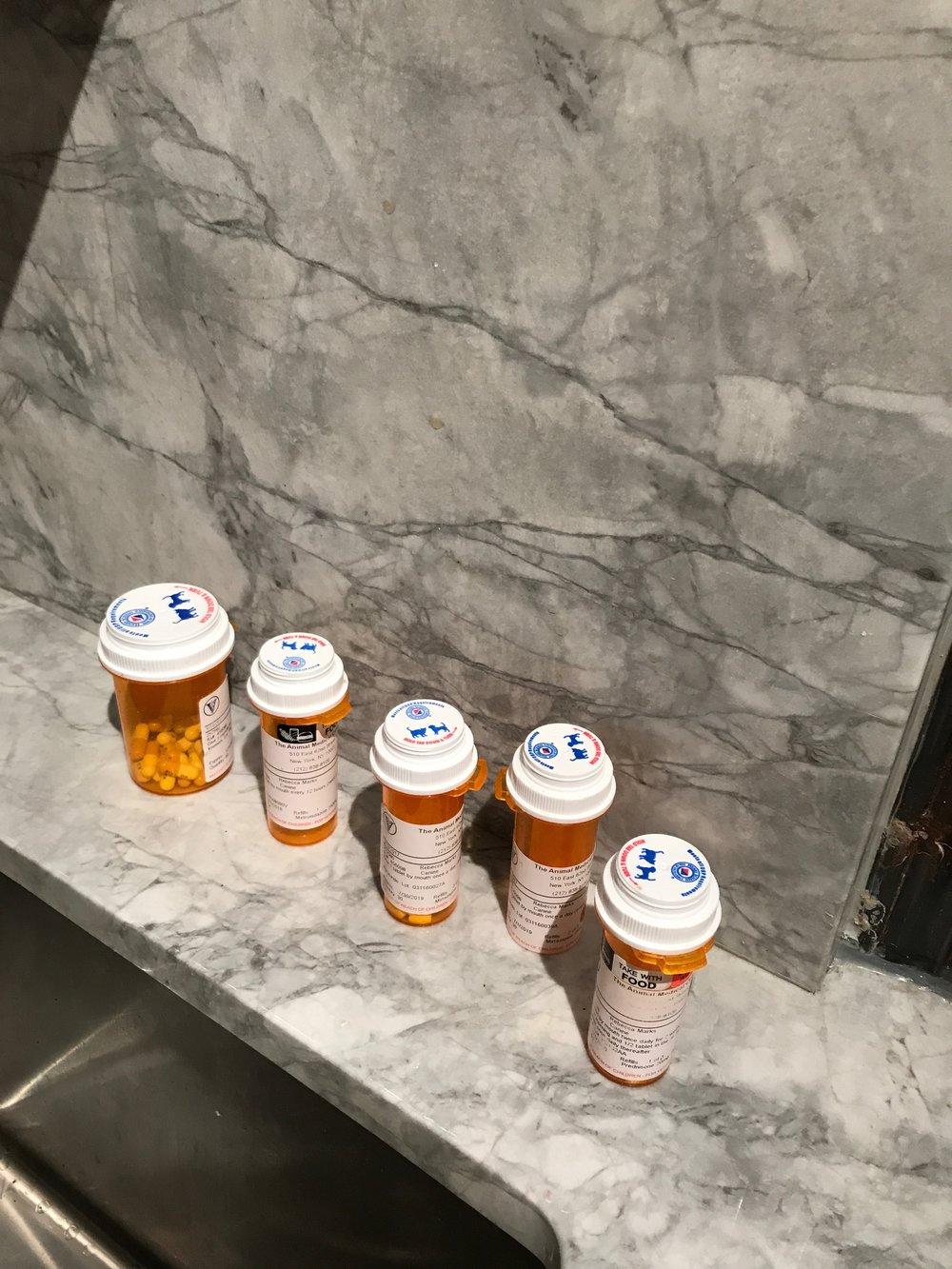Moki's meds!