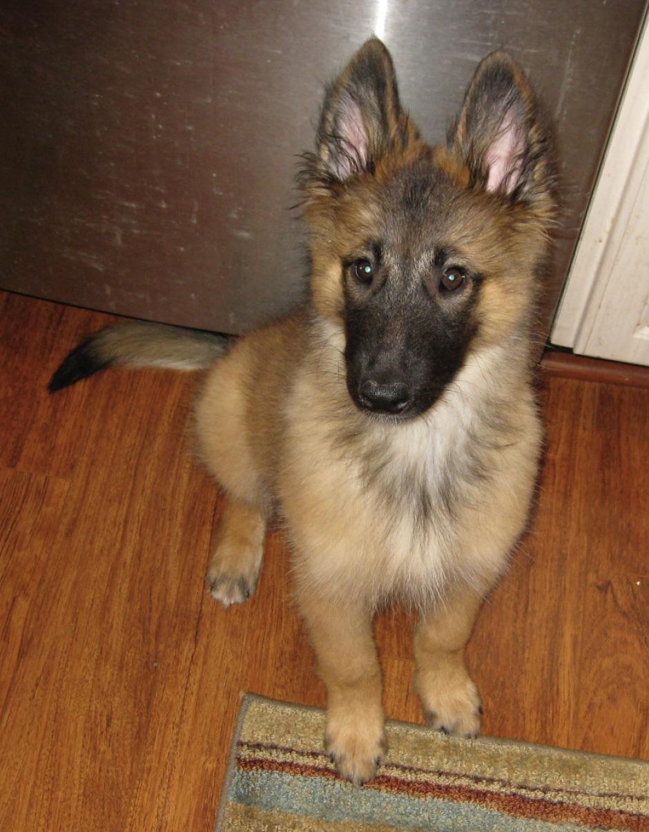Moki at eight weeks