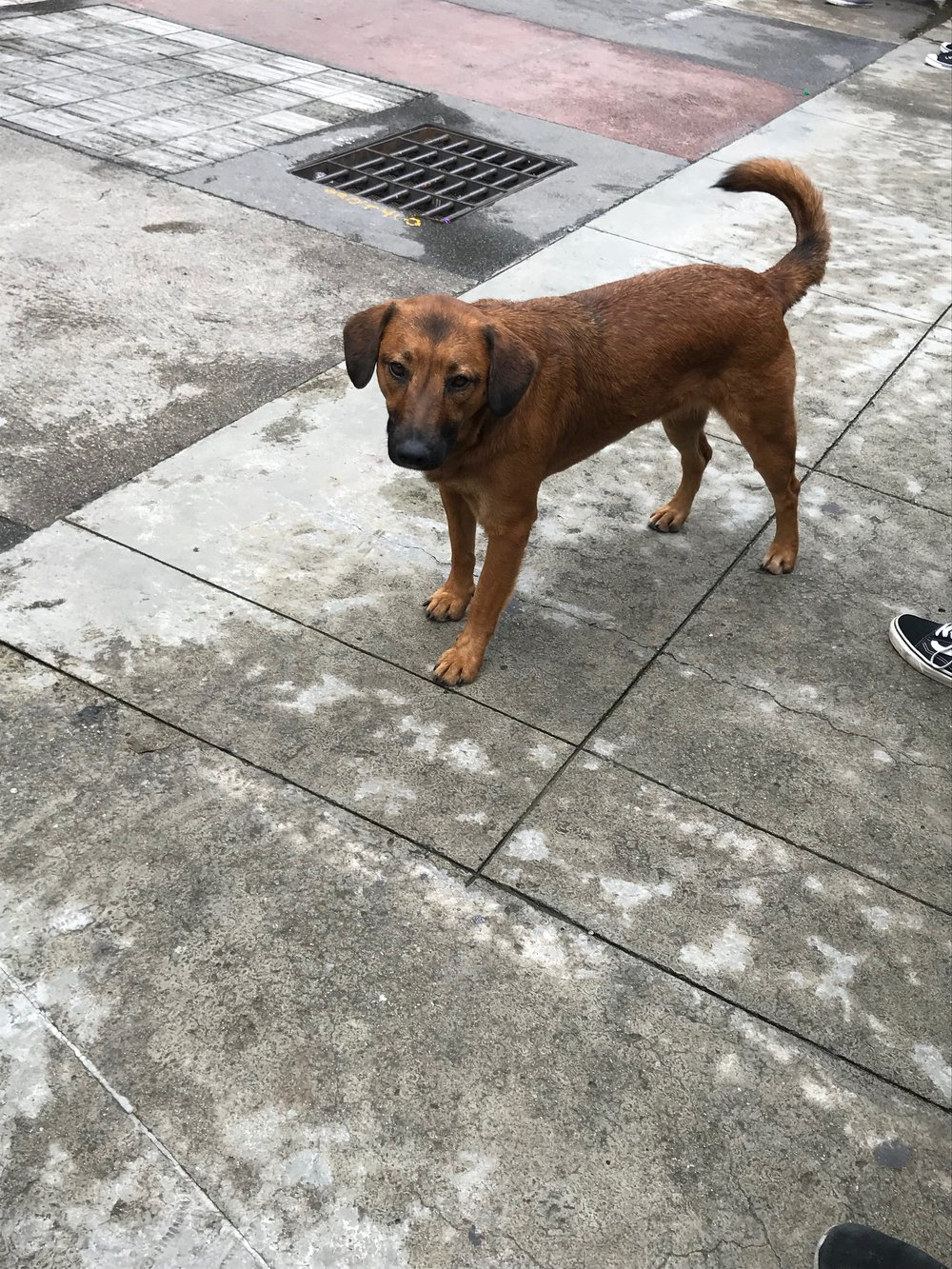 One of the many dogs in Medellin