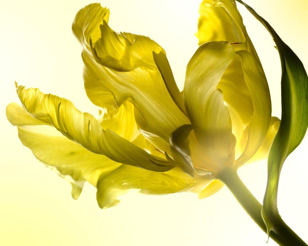 120229_SA_Flowers_02_062_Main_LAB.jpg