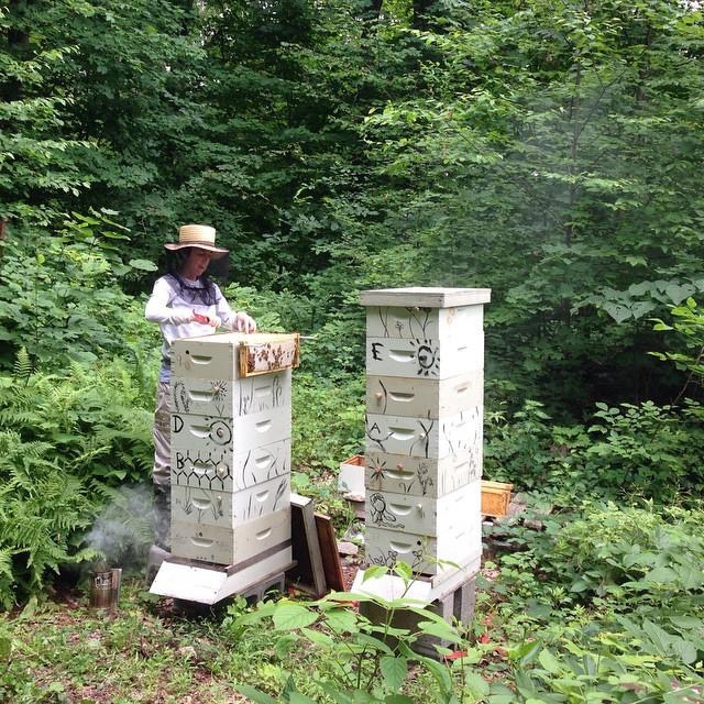 e85174789363b3d6-two_hives.jpg
