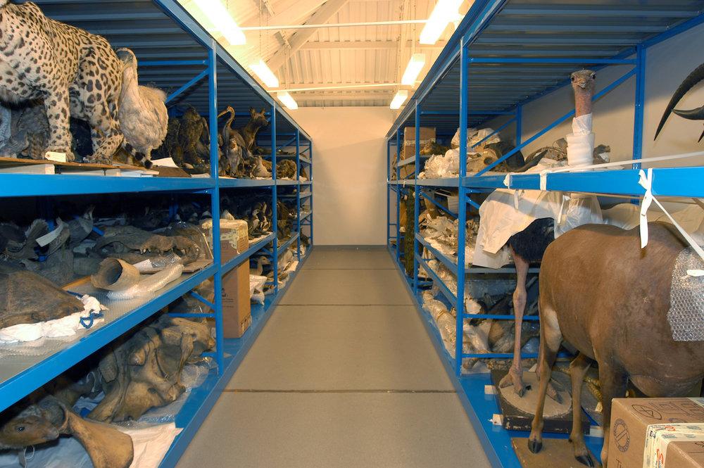 Museum Storage //