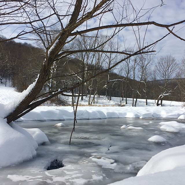 Although we're dealing with low single digit temperatures, we can't help but admire the beauty of this place. . . . . . . . . #greenerpasturespa #winterwonderland #pennsylvania #farmlife #naturalliving #knowyourfood #farmtotable #farmtofork #winter #outdoorliving #allnatural #localfood #winterscape #familyfarm
