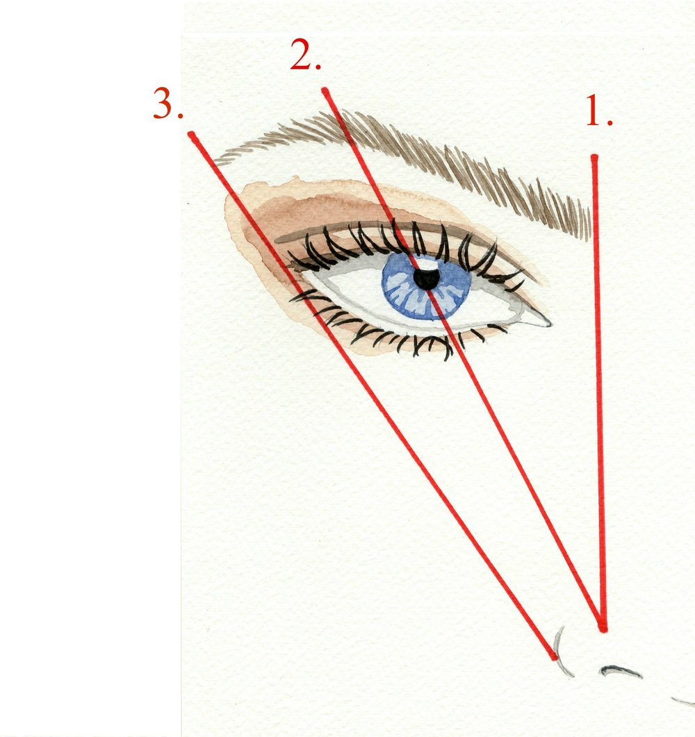 Measure brow wide numbered.jpg