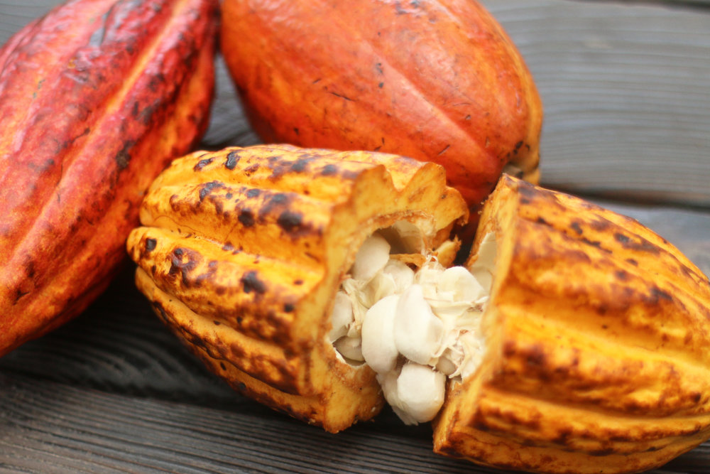 cacaopodsbanner.jpg