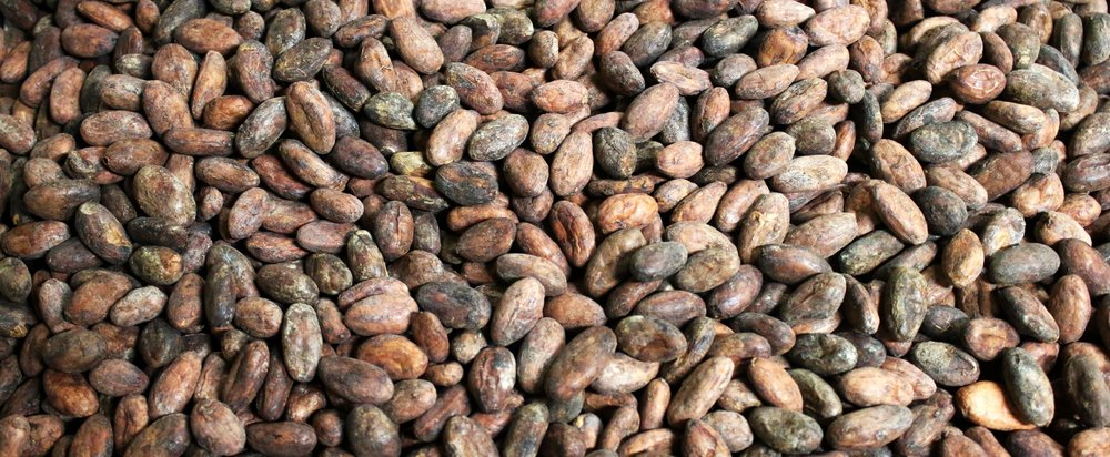 cacaobeanbanner.jpg