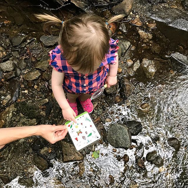 Search & Find mountain streams and pigtails 🙌🌲
