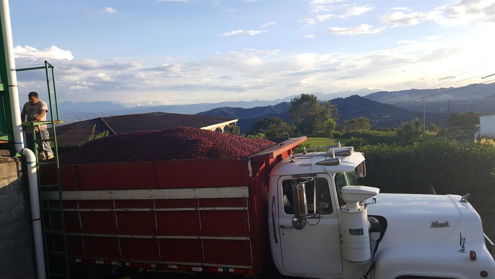 full truck of ripe cherry.jpg