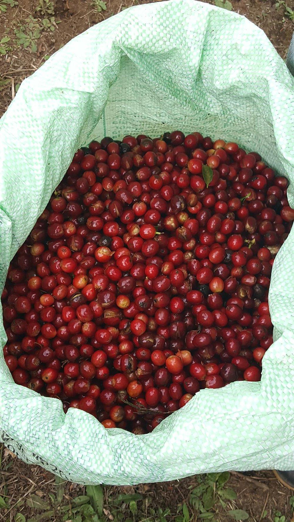 ripe cherry delivery.jpg