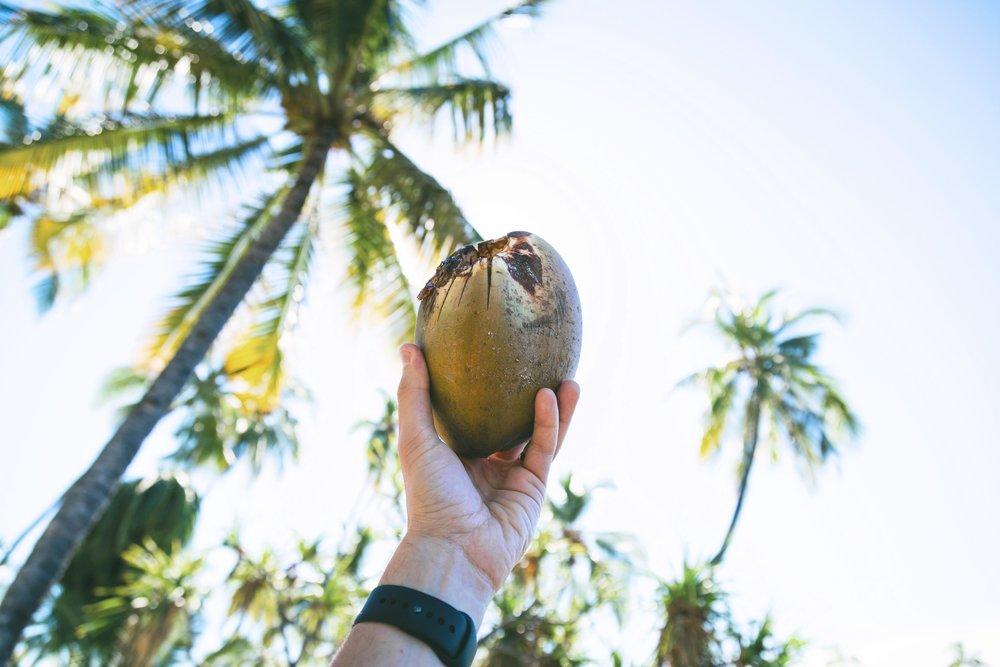 Coconut 1.jpg