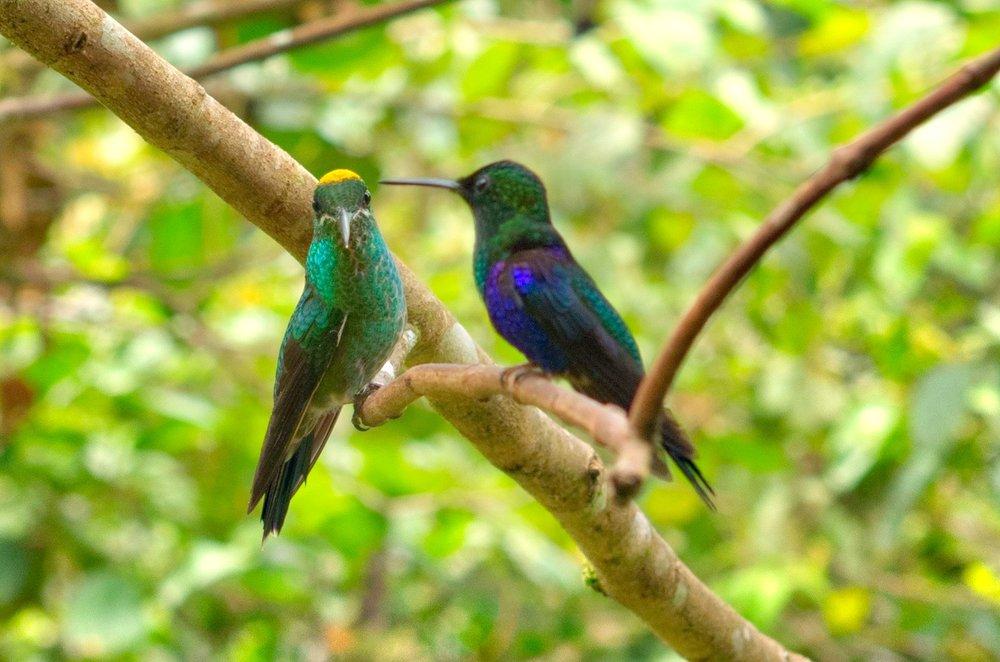 2 Hummingbirds.jpeg