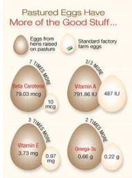 Pasture vs Standard Egg Part 1.jpg