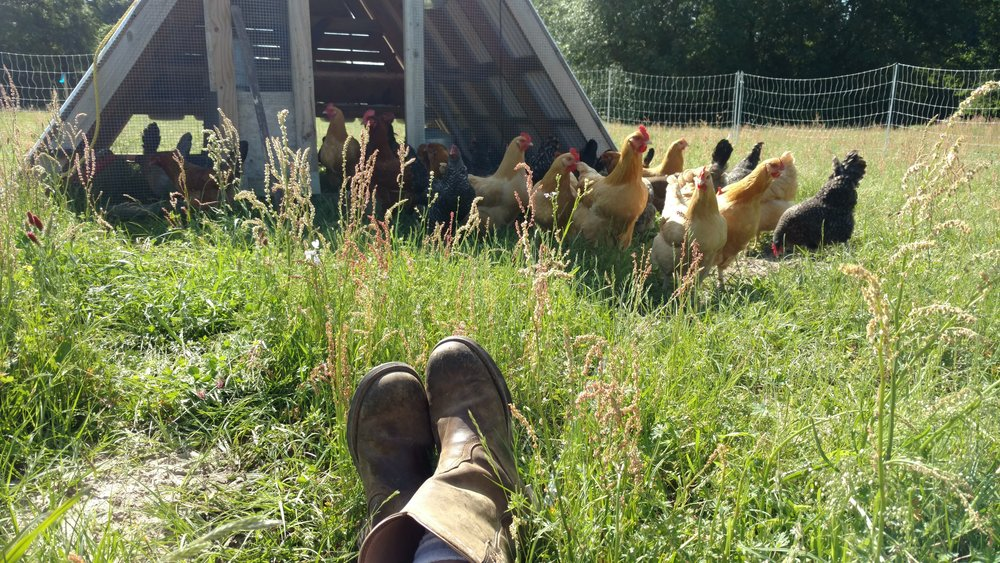 Hens keeping me company while I take a rest