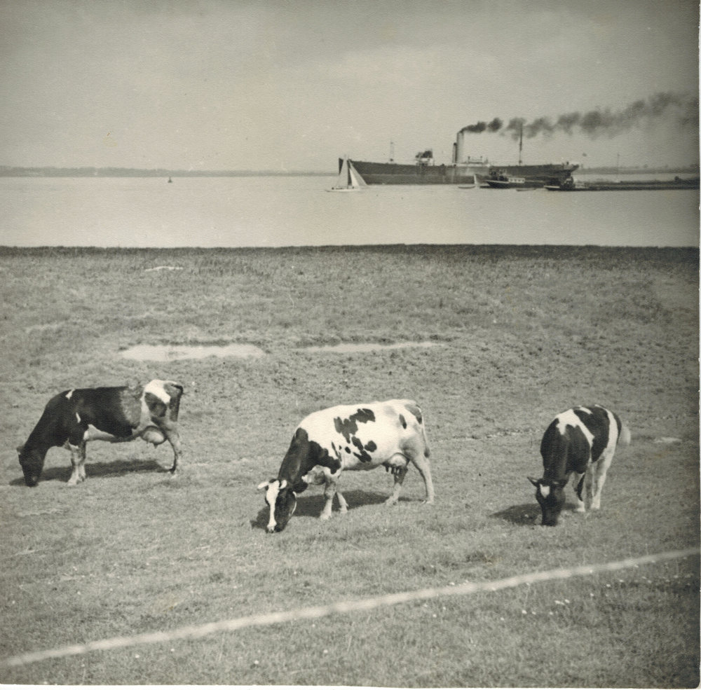 Albert Renger-Patzsch,  Cows grazing with steamship behind (Landscape in Northern Germany) , 1930, Gelatin silver print, stamped verso, 17.2 x 17.2 cm