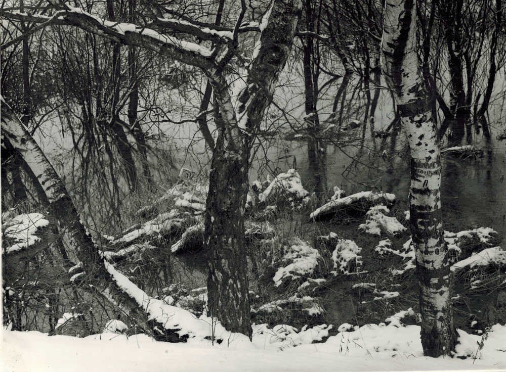 Albert Renger-Patzsch,  Birken am Mohue ufer (Woodland Orchard in Winter) , 1930-39, Gelatin silver print, stamped verso, titled and dated verso, 17 x 22.9 cm