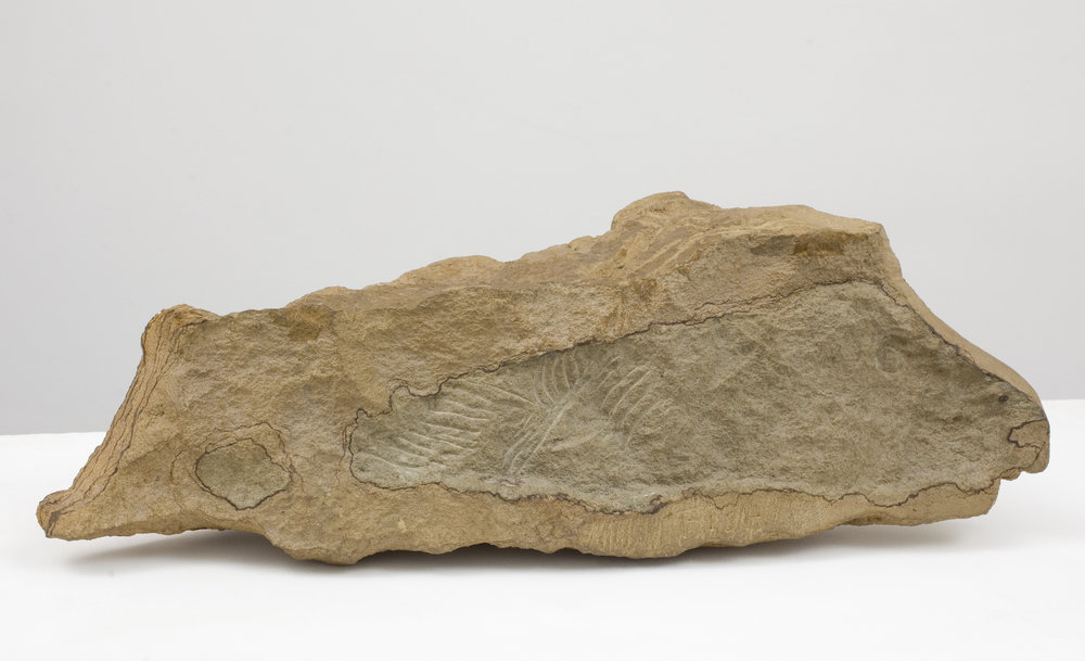 Barry Flanagan,  Lamb/Fish , 1975, Hornton stone on a wooden base, 26 x 63.5 x 14 cm. (including the wooden base), Signed with the artist's initial 'f' (on the top of the stone); incised 'FISH' (on the side)