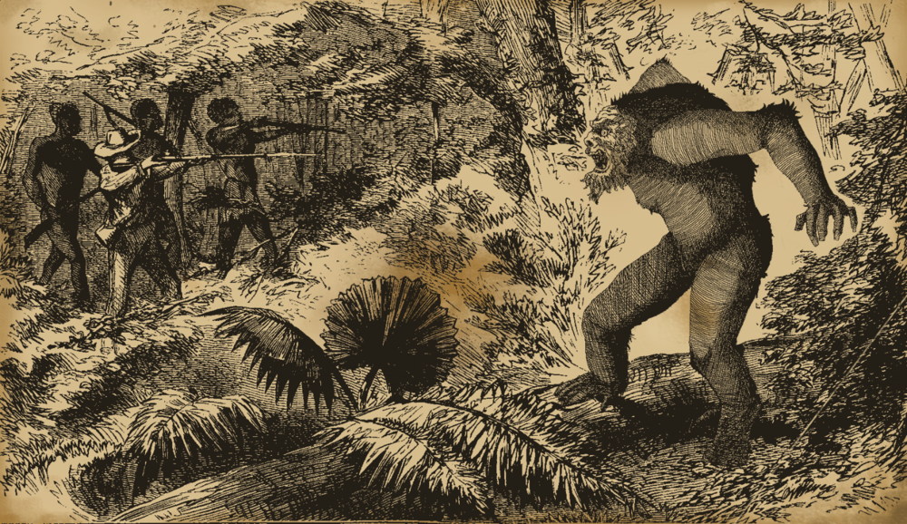 "The gorilla was once believed to be a mythical creature, and this 1842 woodcut depicts explorer Percy Du Chaillu encountering the ""hairy wild man"" in the Belgian Congo. This particular expedition ended tragically when Du Chaillu shot the creature, only to find that it was actually his assistant Arthur Winterbottom, who had dressed up in the costume as a prank."