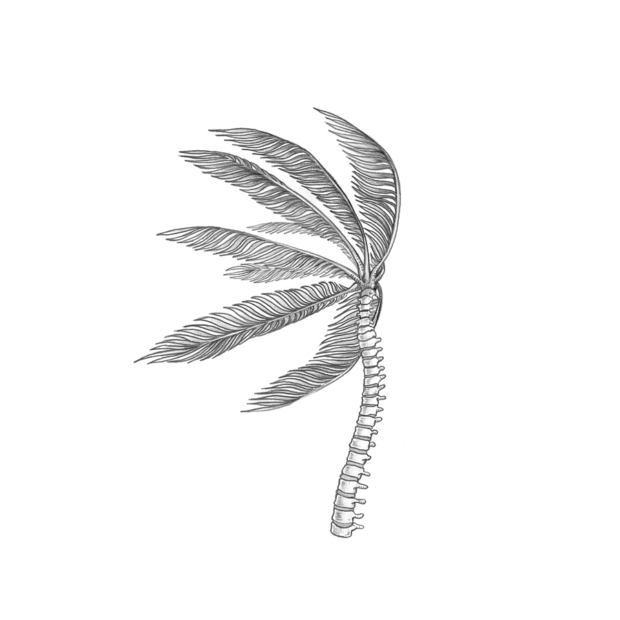 scott-chenoweth-spine_palm.jpg