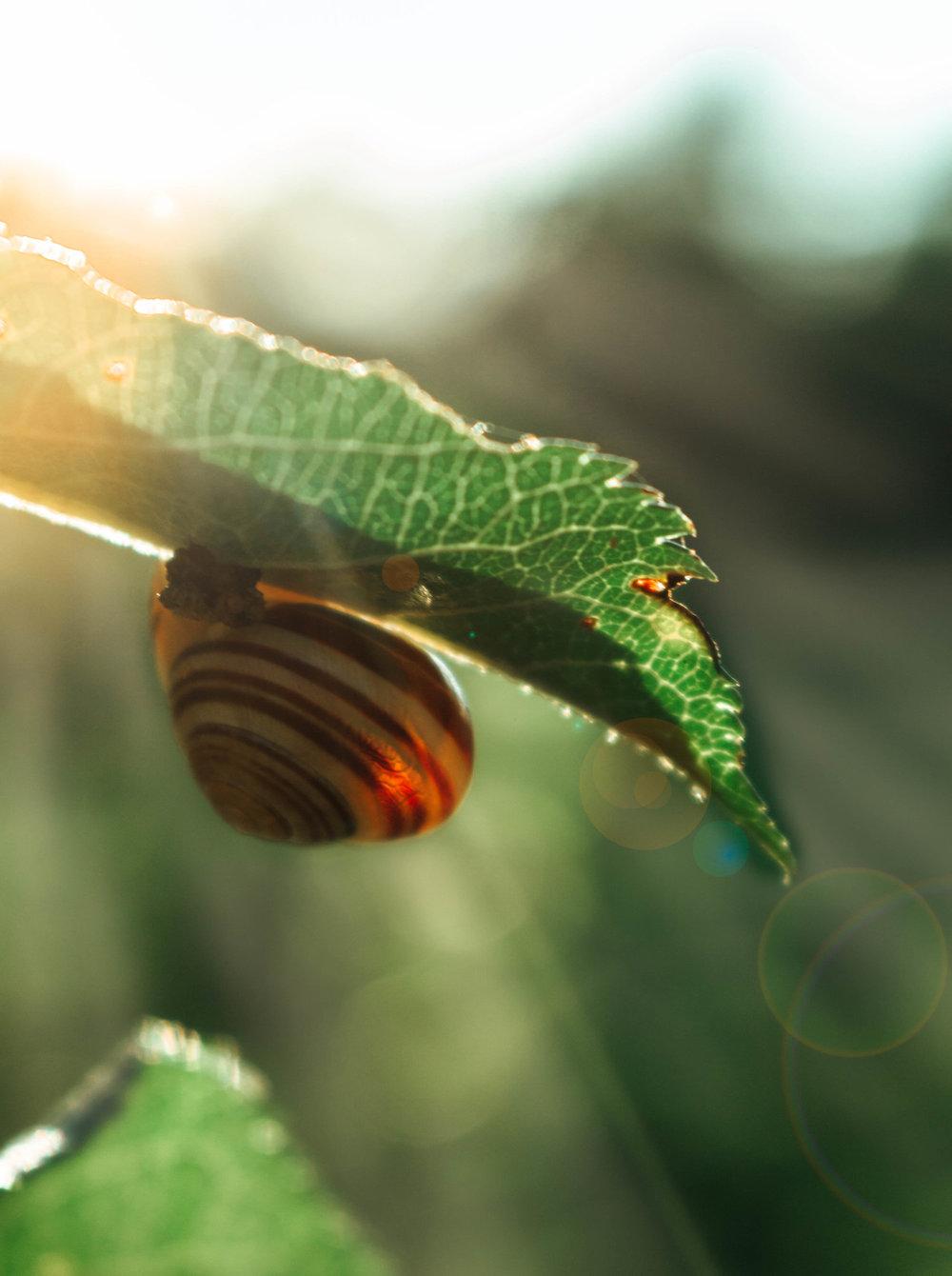 IMG_7991-Editmontreal+shots.jpg