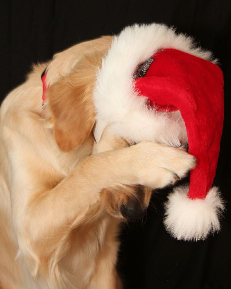 9dde1c7a3feebd7313601b1a357a4769--merry-christmas-pet-humor.jpg