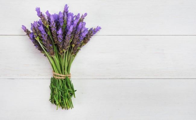 Lavender Lavandula Angustifolia Alandi Ayurveda