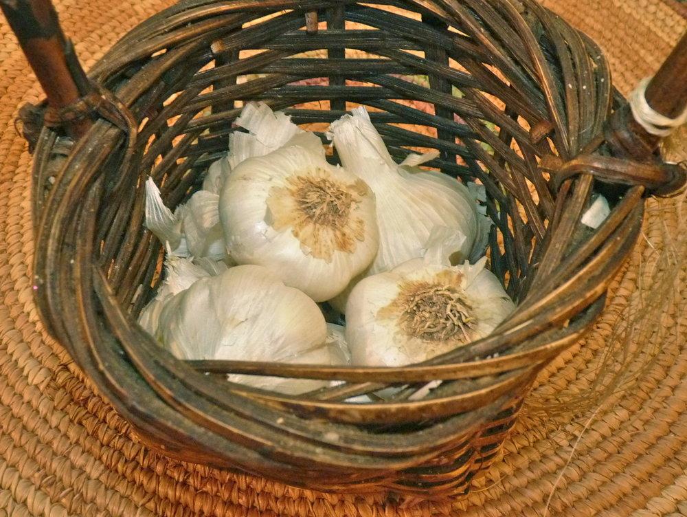Ayurvedic Diet_GarlicJPG