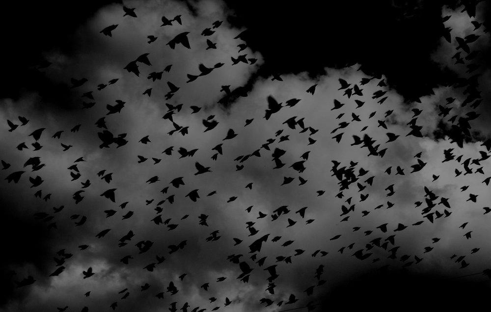 birds-691274_1920.jpg