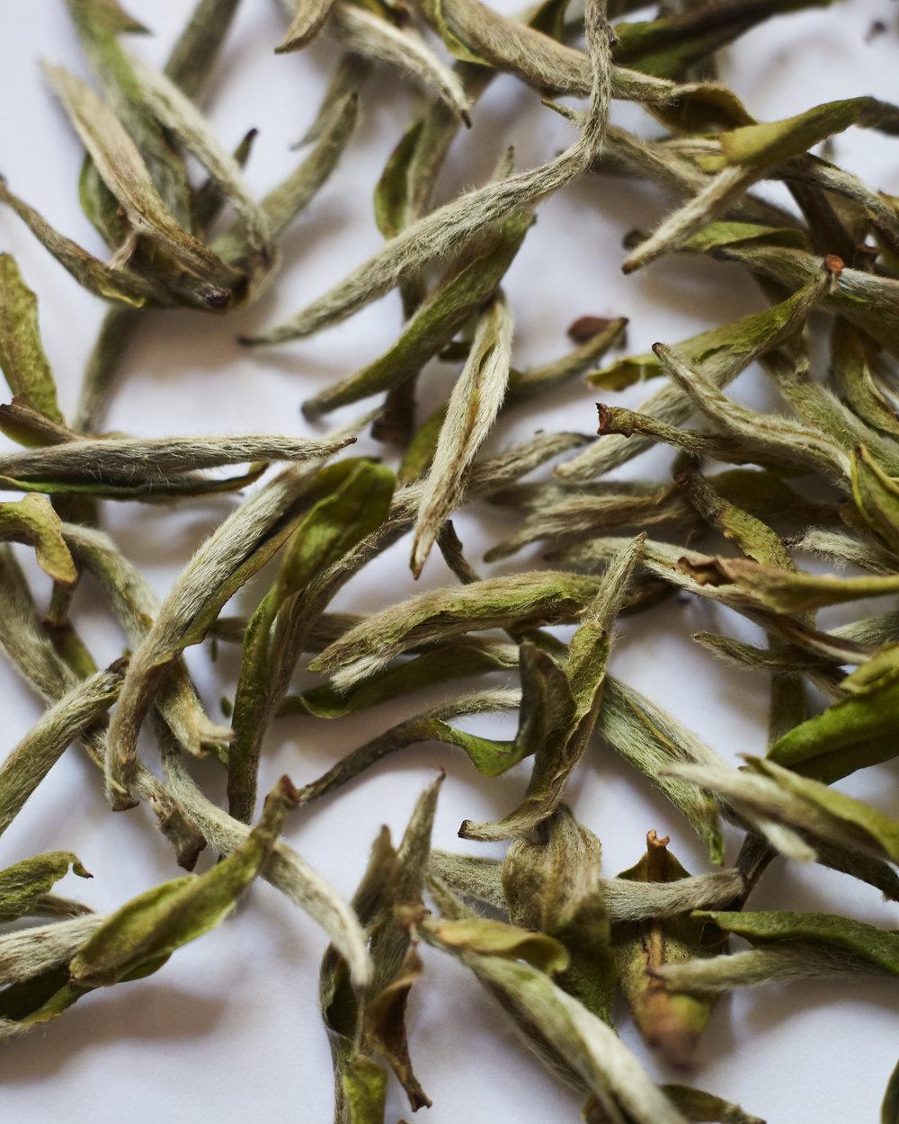 Bai Hao Yin Zhen Loose Leaf Tea Close Up