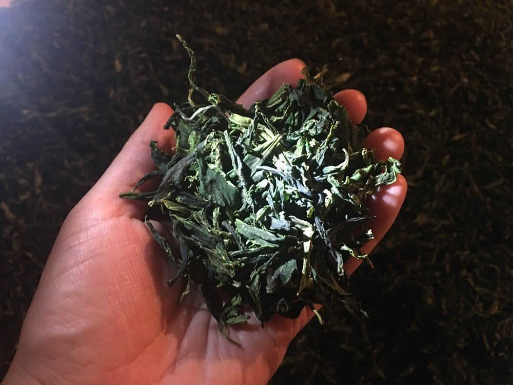 Holding a Handful of Tea Leaves