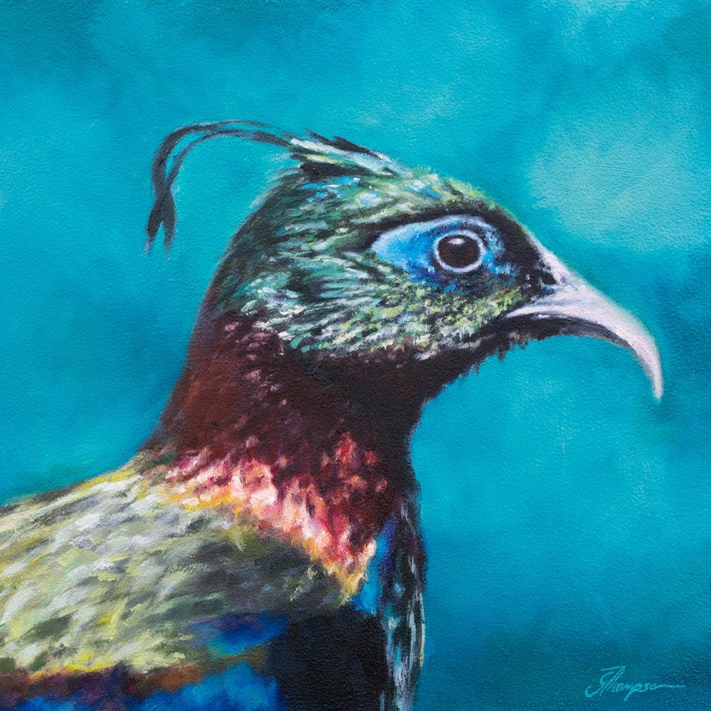 Impeyan Pheasant - SOLD