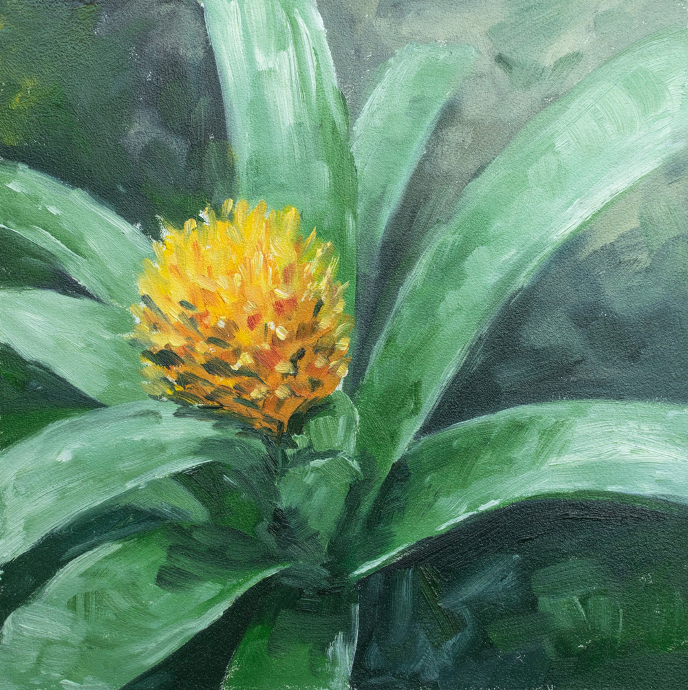 Flower Study - FOR SALE $50