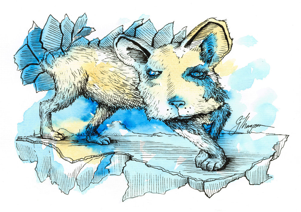 African Wild Dog on Ice - Available