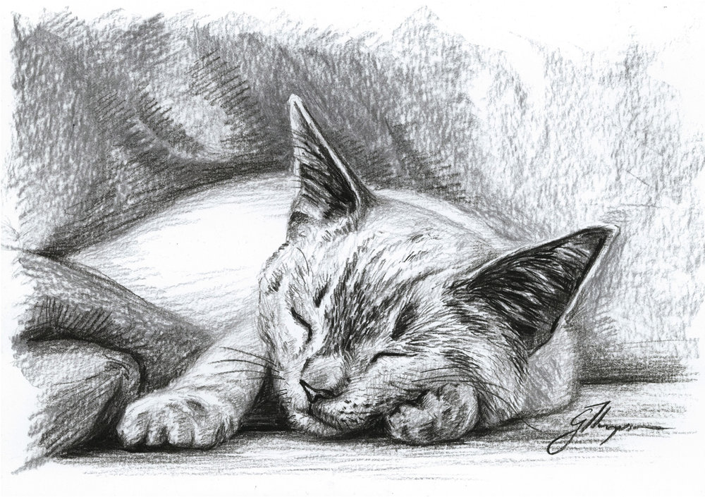 gallery-drawing-bentley-asleep.jpg