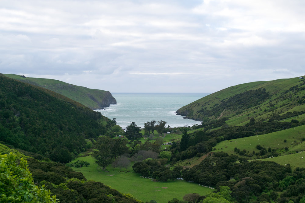 blog-hinewai-artist-retreat-walk-view.jpg