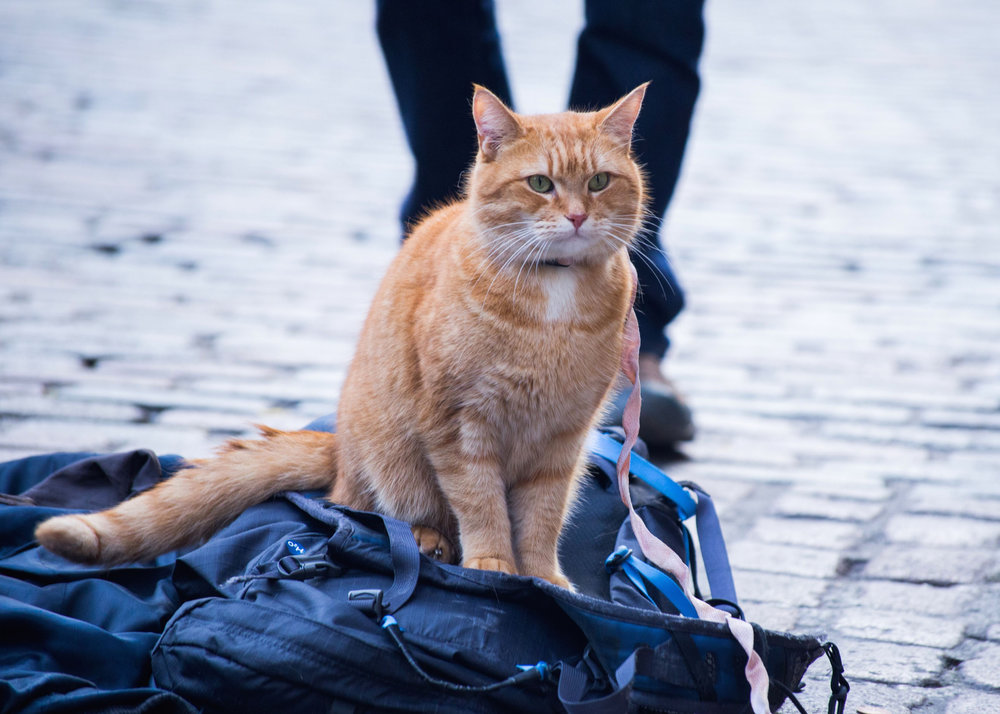 Bob, A Street Cat Named Bob. Photo by Andreas Lambis.jpg