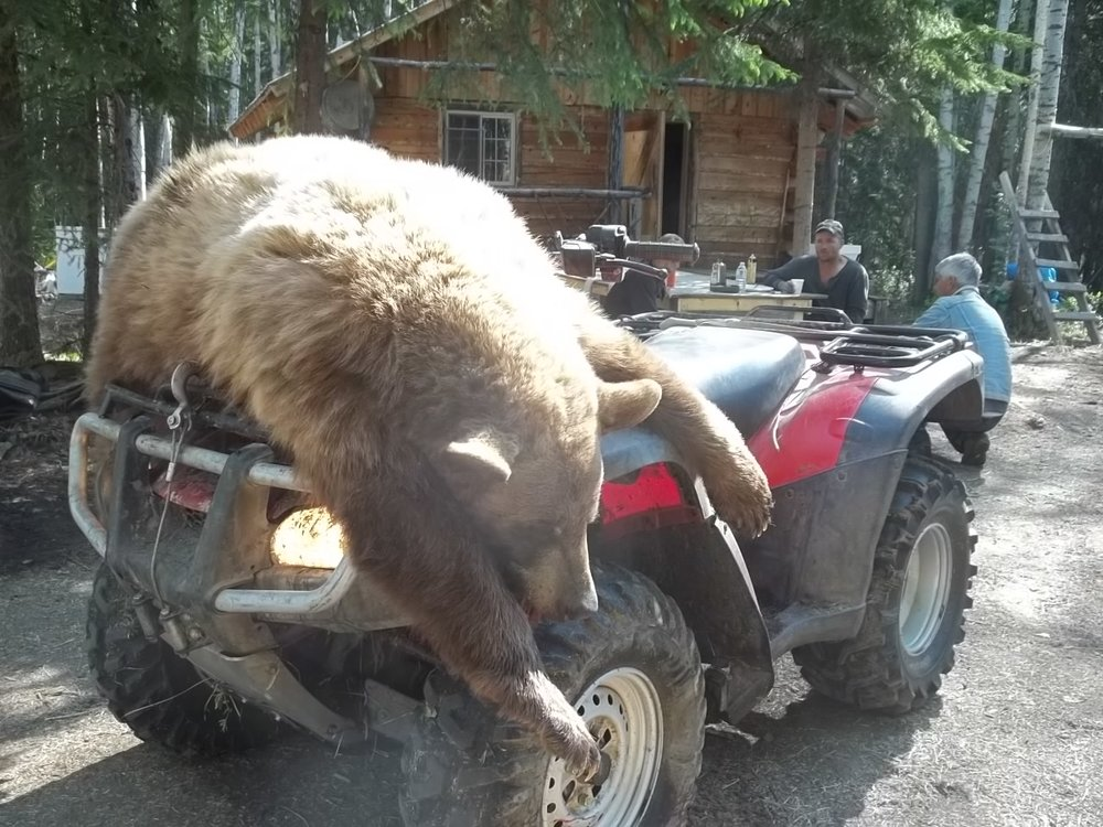 Bear Hunt canada 2012 096.JPG