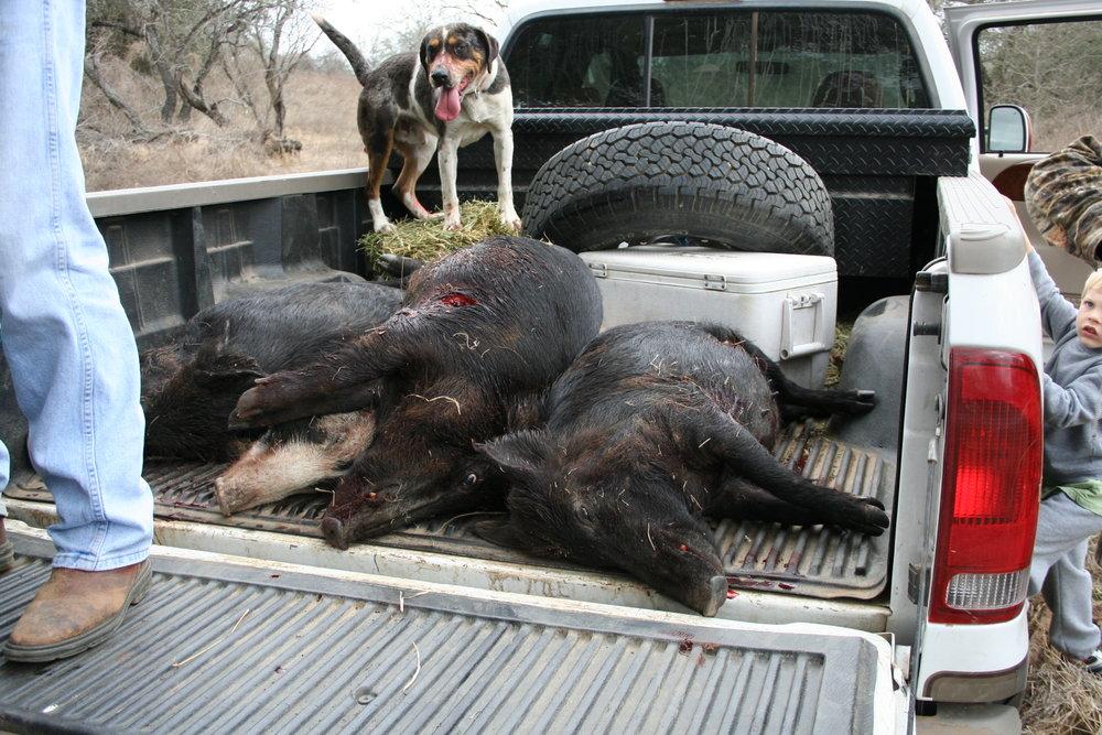 Hog hunt 3-9-08 115.jpg