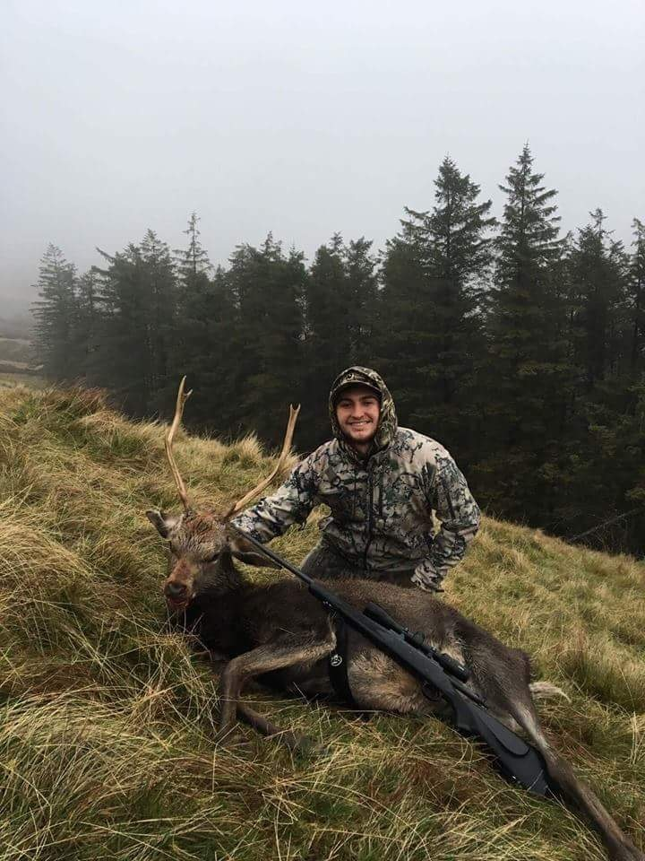 Wicklow Sika Stag