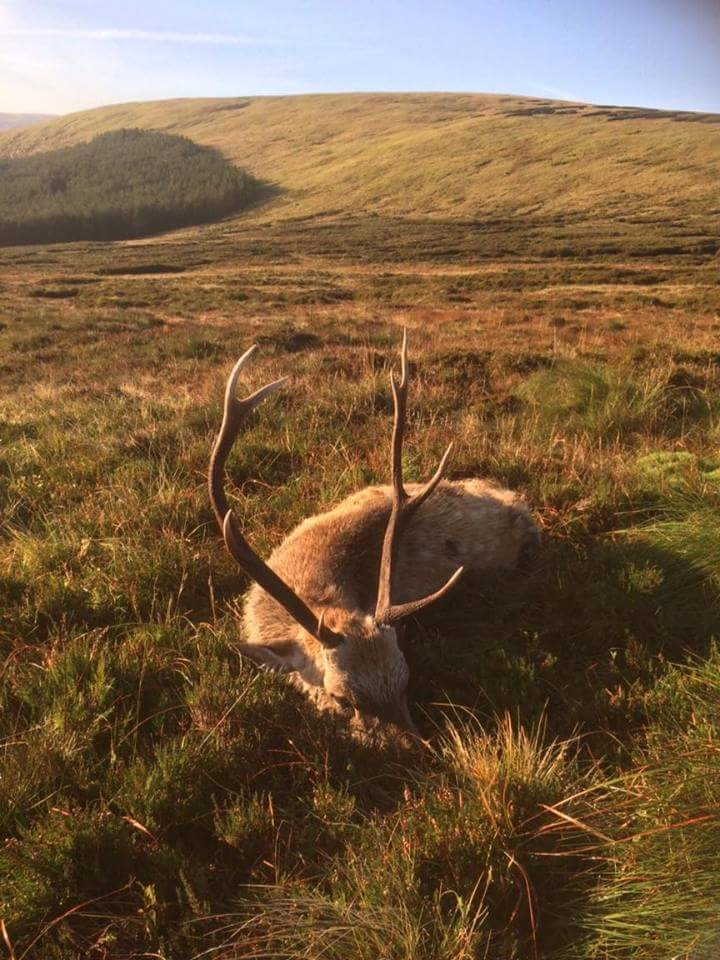 Deer Hunting Ireland (2).JPG