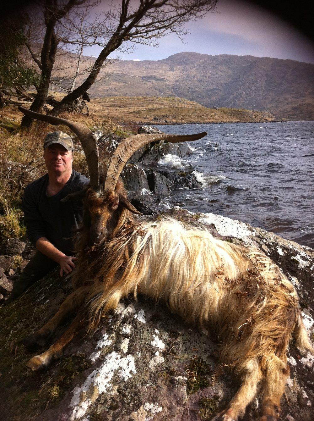 Ibex Ireland.JPG