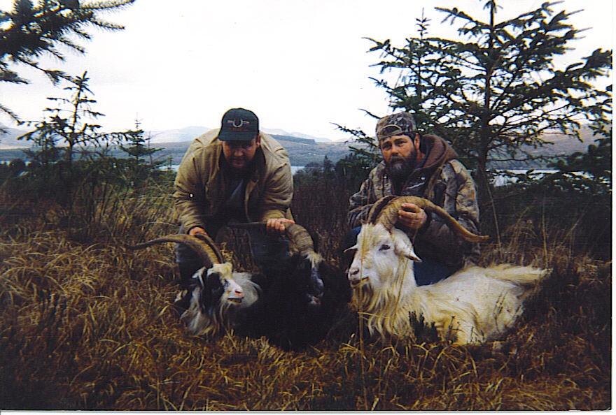 Irish Ibex (5).jpeg