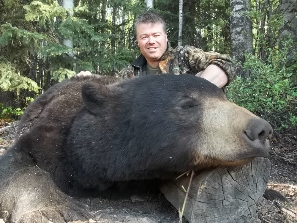 Canadian Black Bear - Celtic Field Sports