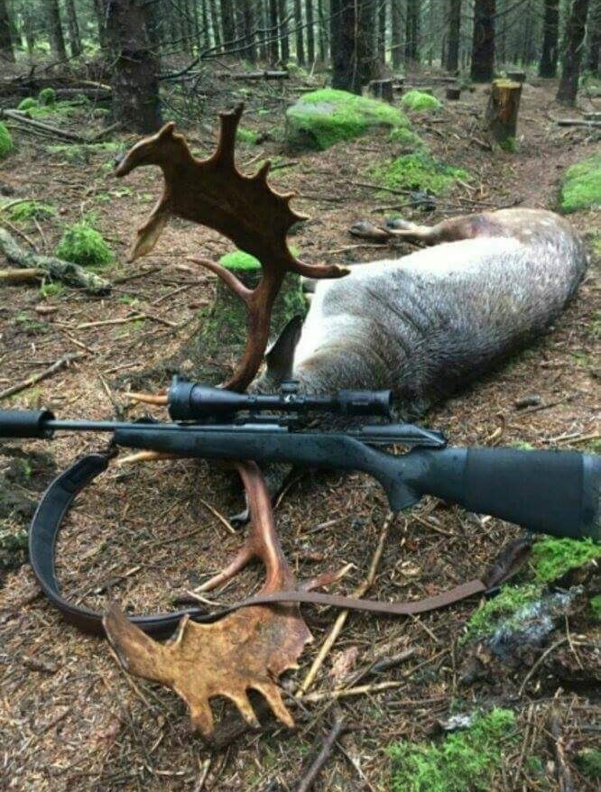 Fallow Deer Ireland (2).jpeg