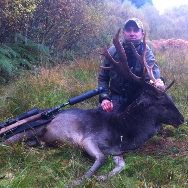 Irish Fallow Stag 4.jpeg