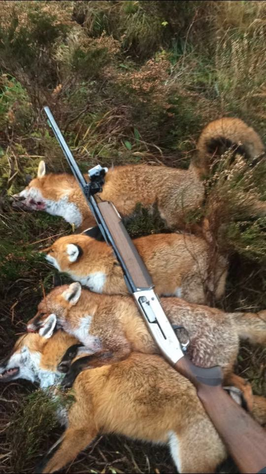 Fox hunt Ireland.jpeg