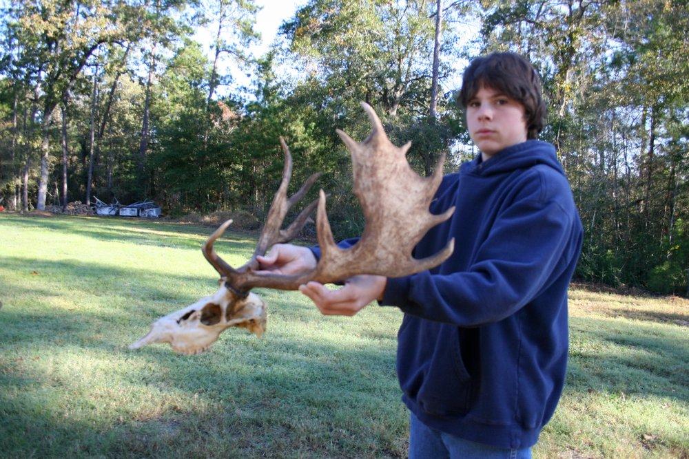 Fallow Deer Ireland  (14).jpeg