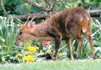 Roe Deer 3.jpeg