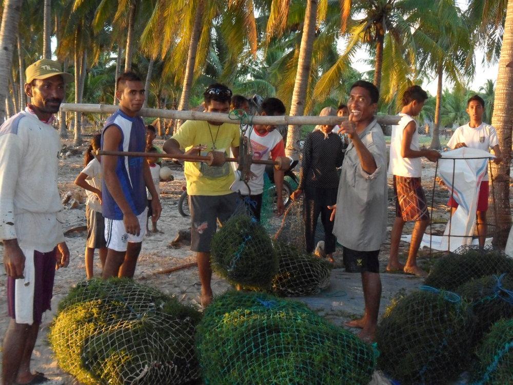 Seaweed farming (2).JPG