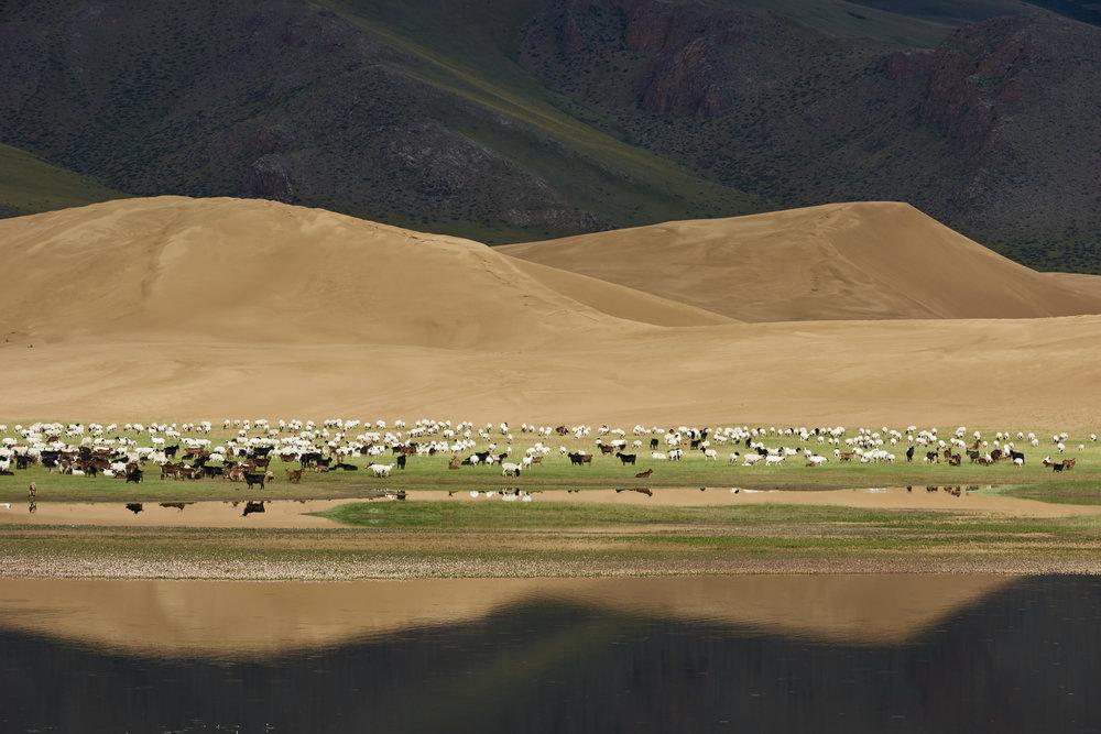 Mongolie5542.jpg
